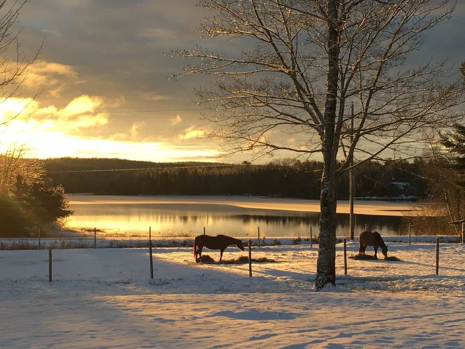 Two horses grazing in a snow-covered field with the sun breaking through the clouds by a lake